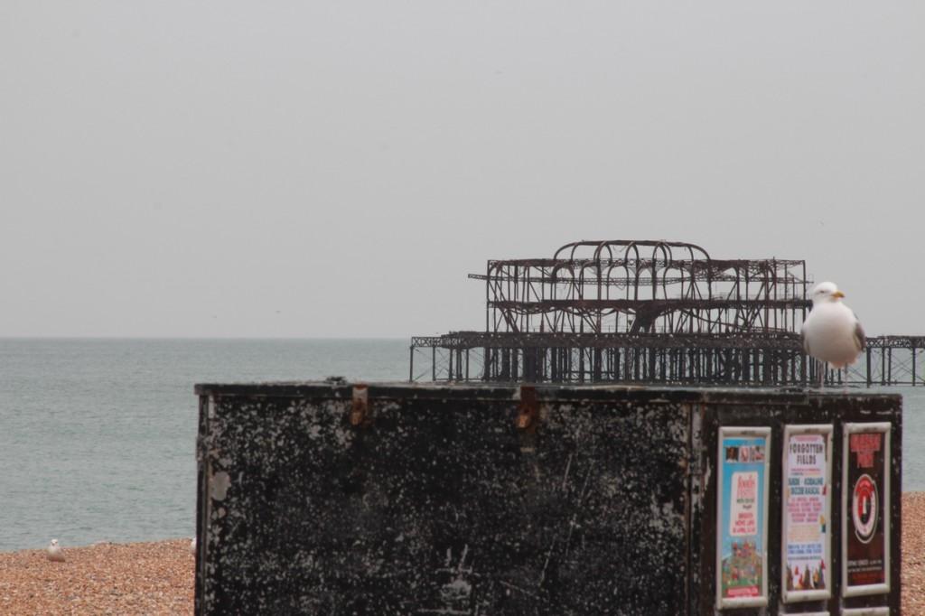 Admiring Brighton Pier - Bagstowear